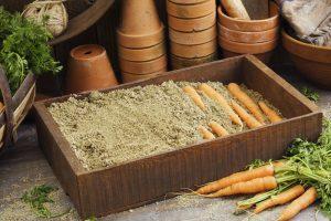 Особенности хранения моркови на зиму: 13 наилучших способов