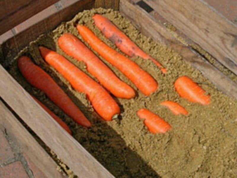 Как хранить морковь в домашних условиях: лучшие способы