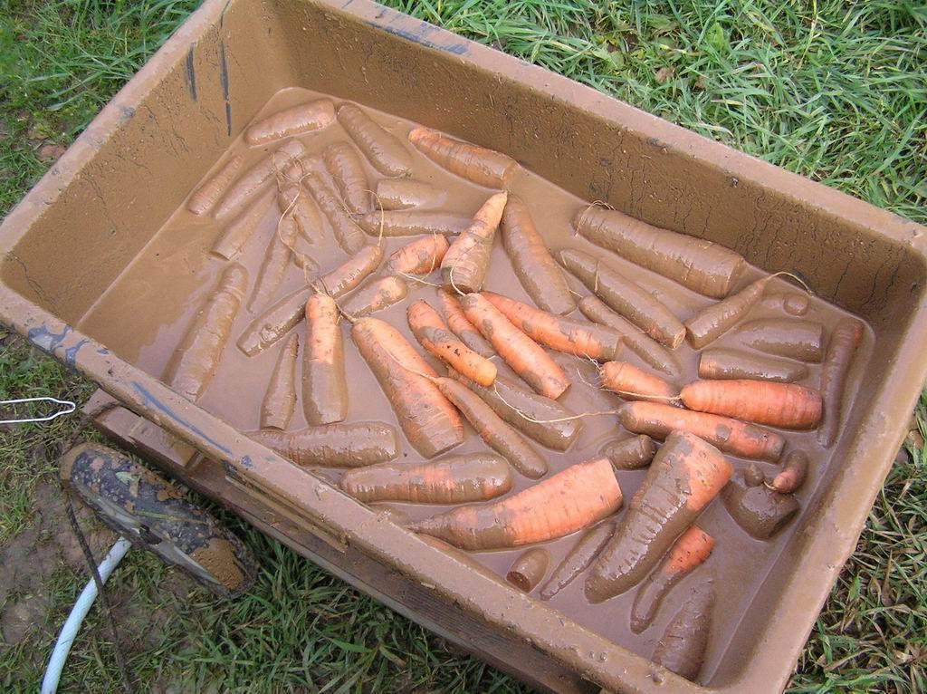 Хранить в домашних условиях морковь и свеклу