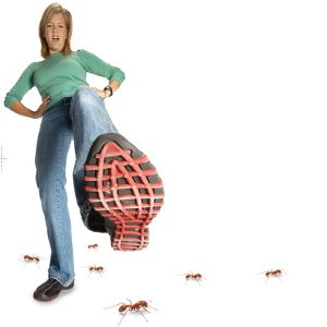 How-to-get-rid-of-ants-in-the-bathroom-03
