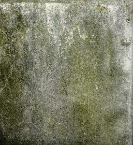 Как избавиться и чем обработать погреб от грибка или плесени
