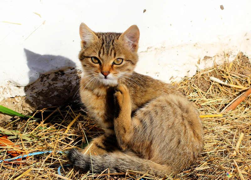 Понос у кота народные средства
