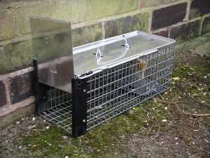 Rat_cage_trap