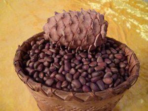 Siberian-cedar-nuts
