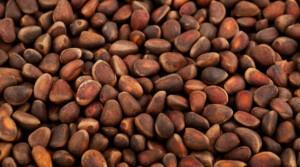 tasty-siberian-cedar-nuts